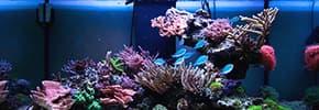 Цены на Террариумы, аквариумы, фото