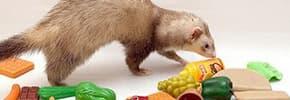 Витамины и добавки для хорьков