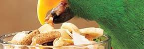 Цены на Лакомства для птиц, фото