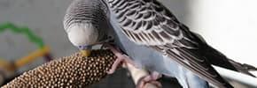 Цены на Витамины, препараты, пищевые добавки для птиц, фото