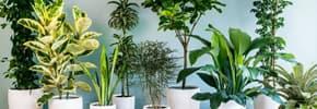 Цены на Комнатные растения, фото