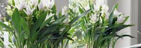 Цены на Искусственные растения , фото