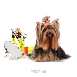Фото Стрижка/груминг собак мелкие породы
